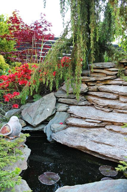 kaskada wodna,jaki kamień wybrać na kaskadę wodną,łupek w ogrodzie,zrób sobie kaskadę DIY,klon palmowy w ogrodzie,drewniane ogrodzenie,różaneczniki,betonowy ptaszek
