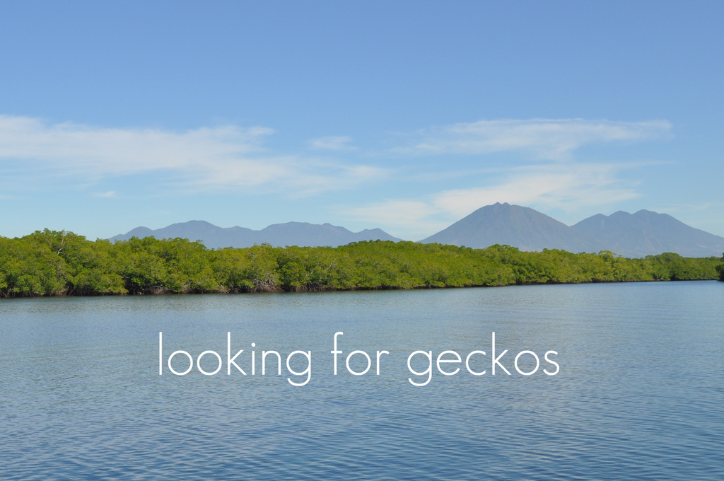 looking for geckos