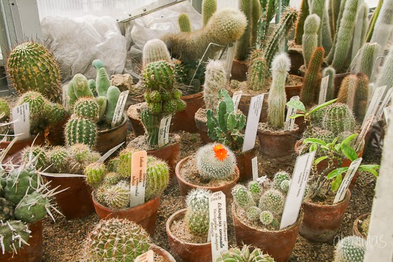 Cactus in National Botanic garden