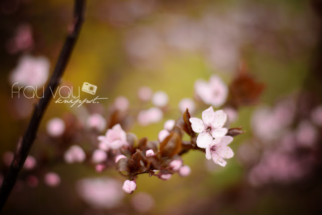 Blüten im Frühling @frauvau.blogspot.de