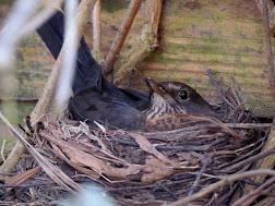 Nesting tweeters