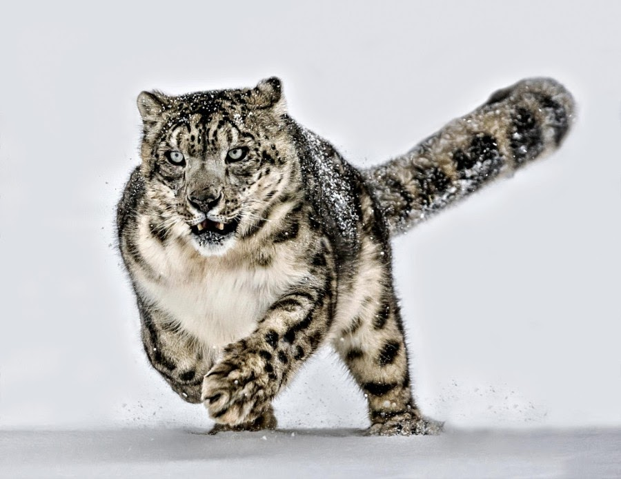 Majestic Wildlife Photography by Paul Keates