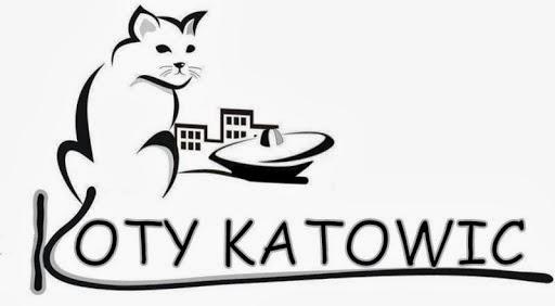 Fundaca opiekująca się kotami z Katowic