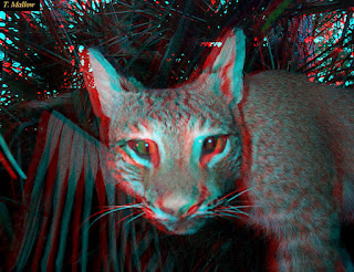 Imagem felino 3D