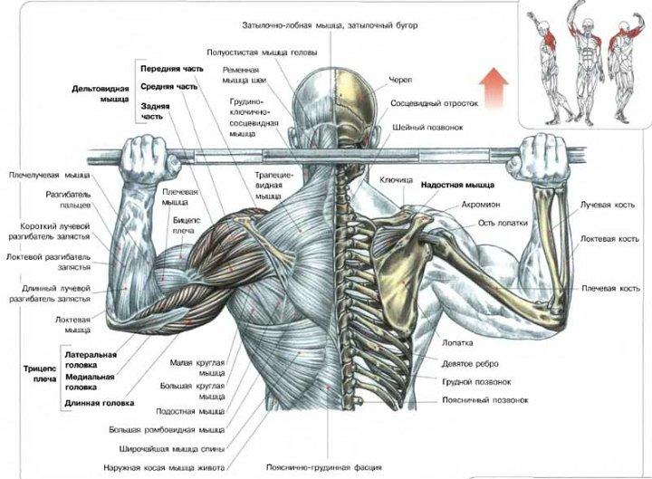 для развития мышц плечей.