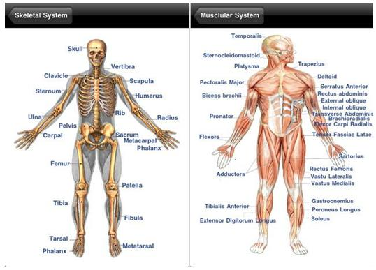 Man Body Part Name With Picture Human Anatomy Body Parts Names