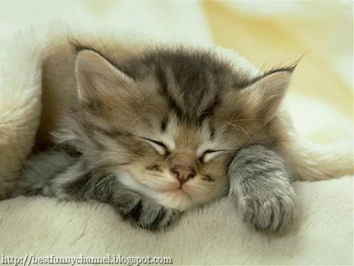 Nice sleeping kitty.
