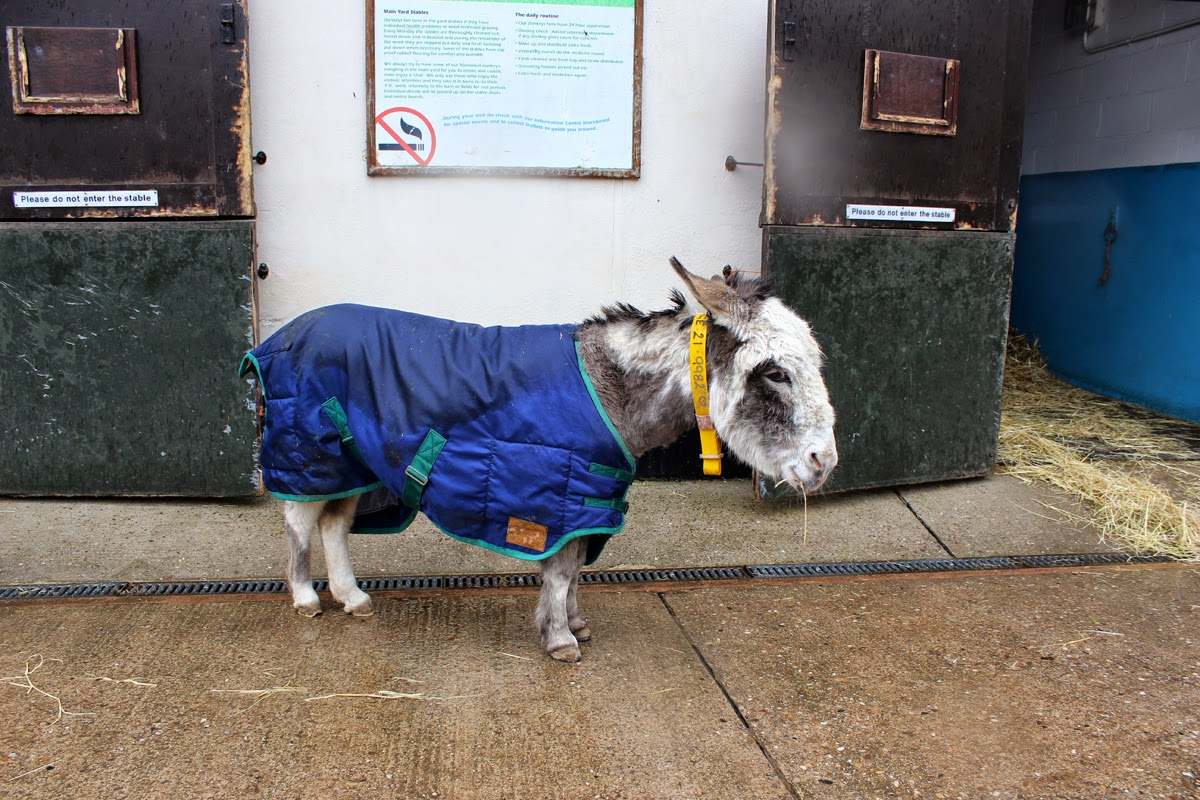 cute donkey, donkey in the rain, spring, animals, todaymyway.com