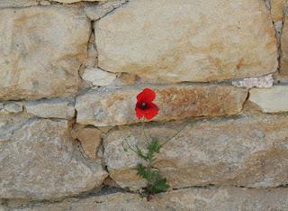 Poppy walls