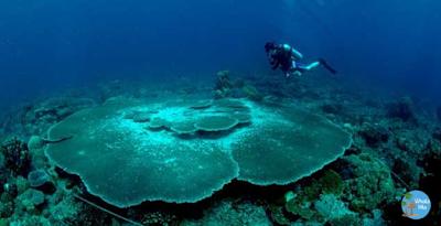 Diving Anambas