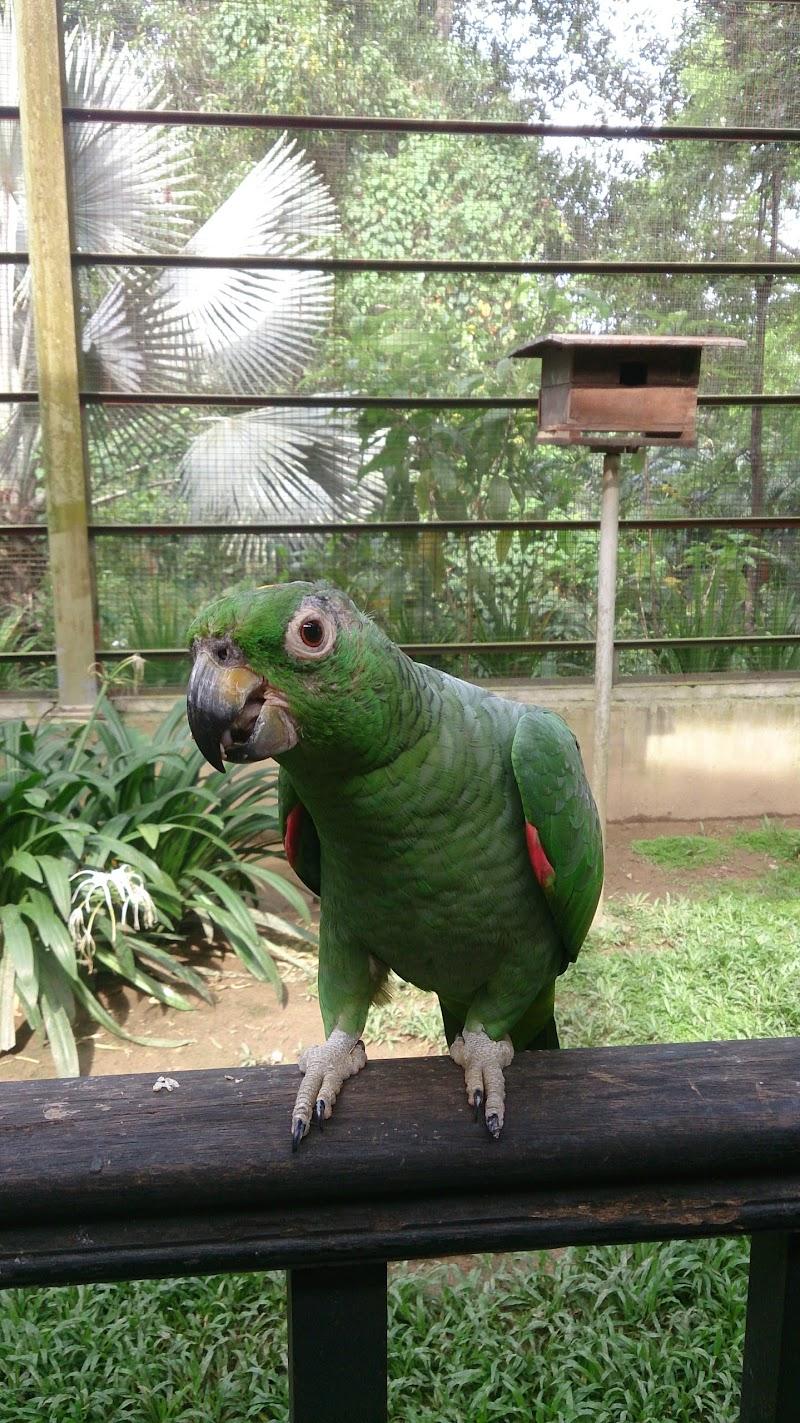 Taman Burung Kuala Lumpur (KL Bird Park)