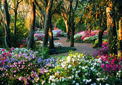Best flowers in the world best flower garden for Best garden plants