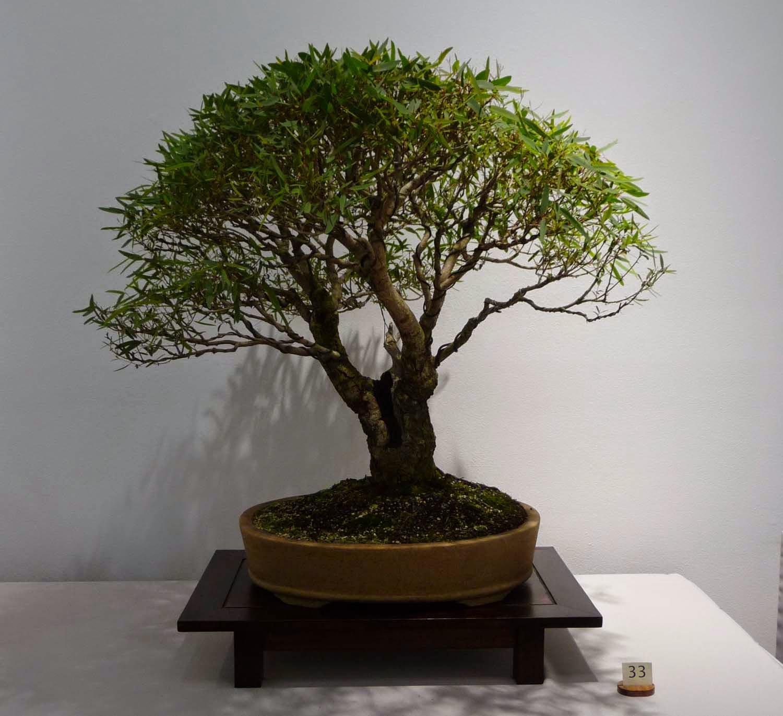 Bonsai Amp Pottery April 2015