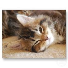 Apprentice-Hazelpaw-she-cat