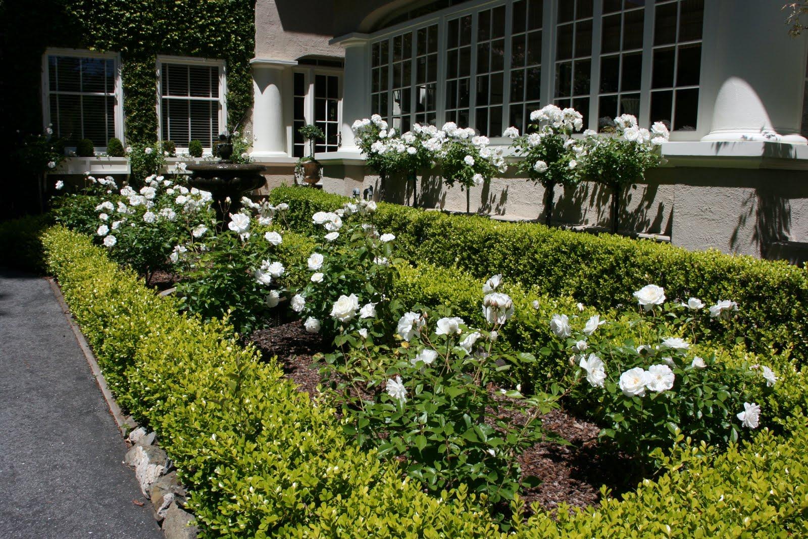 Vignette design iceberg roses galore for White garden design