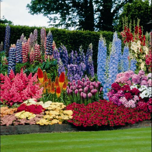 Ask erena gardening for beginners for Beautiful flower beds