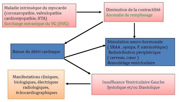 physiopathologie de l'insuffisance cardiaque chronique