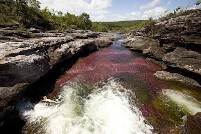 color water crystal river 07 Sungai Kristal   Sungai tercantik di Dunia (16 Gambar)