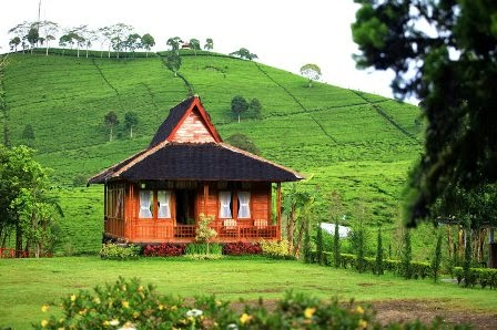 Villa ditengah-tengah perkebunan teh malabar