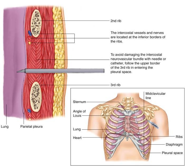 thieme atlas of anatomy 3rd ed pdf