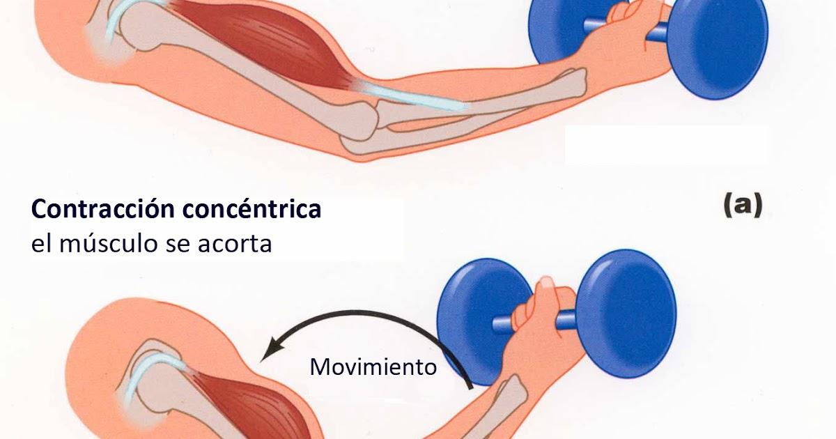 Técnicas de Estiramiento Muscular, FNP ~ Músculos, Anatomía y ...