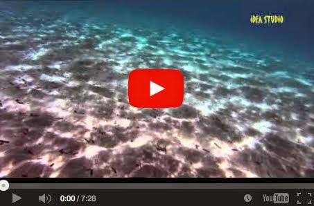 Αρτέμιδα - μακροβούτια στα καθάρια νερά
