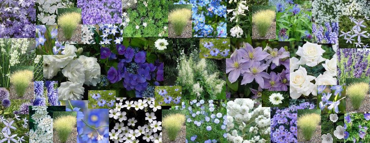 Le jardin des lutins mon futur massif blanc et bleu for Composer son jardin