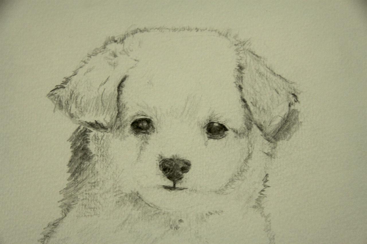 Cute dog drawings tumblr - photo#25