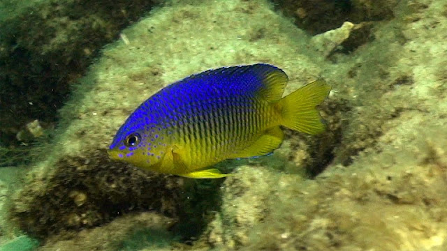 destin snorkel fish