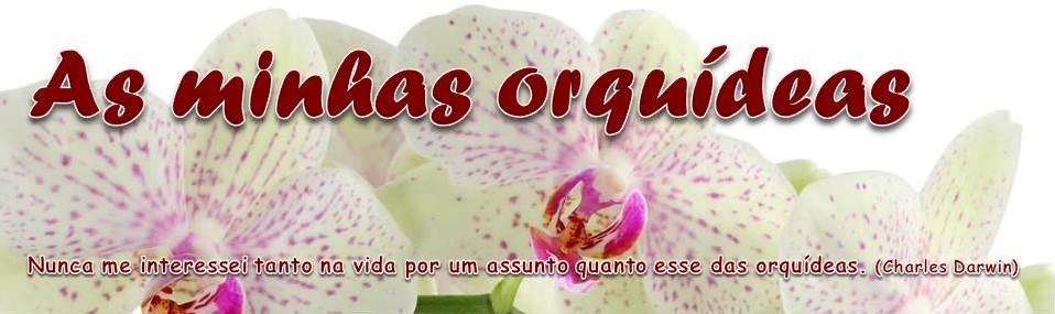 As minhas orquídeas