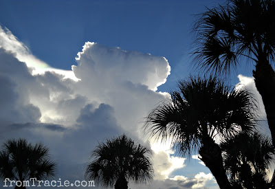 Blue Sky, Clouds, and Palm Trees