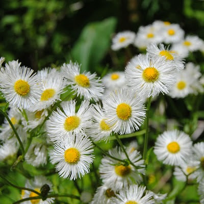 Wild flowers, Spring download free wallpapers for Apple iPad