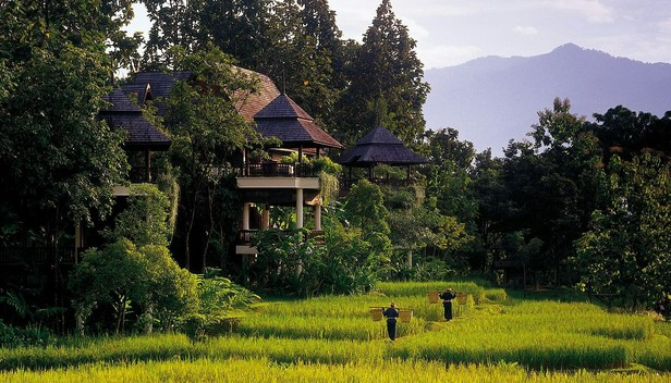 ừng rậm Chiang Mai