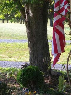sqirrel under tree
