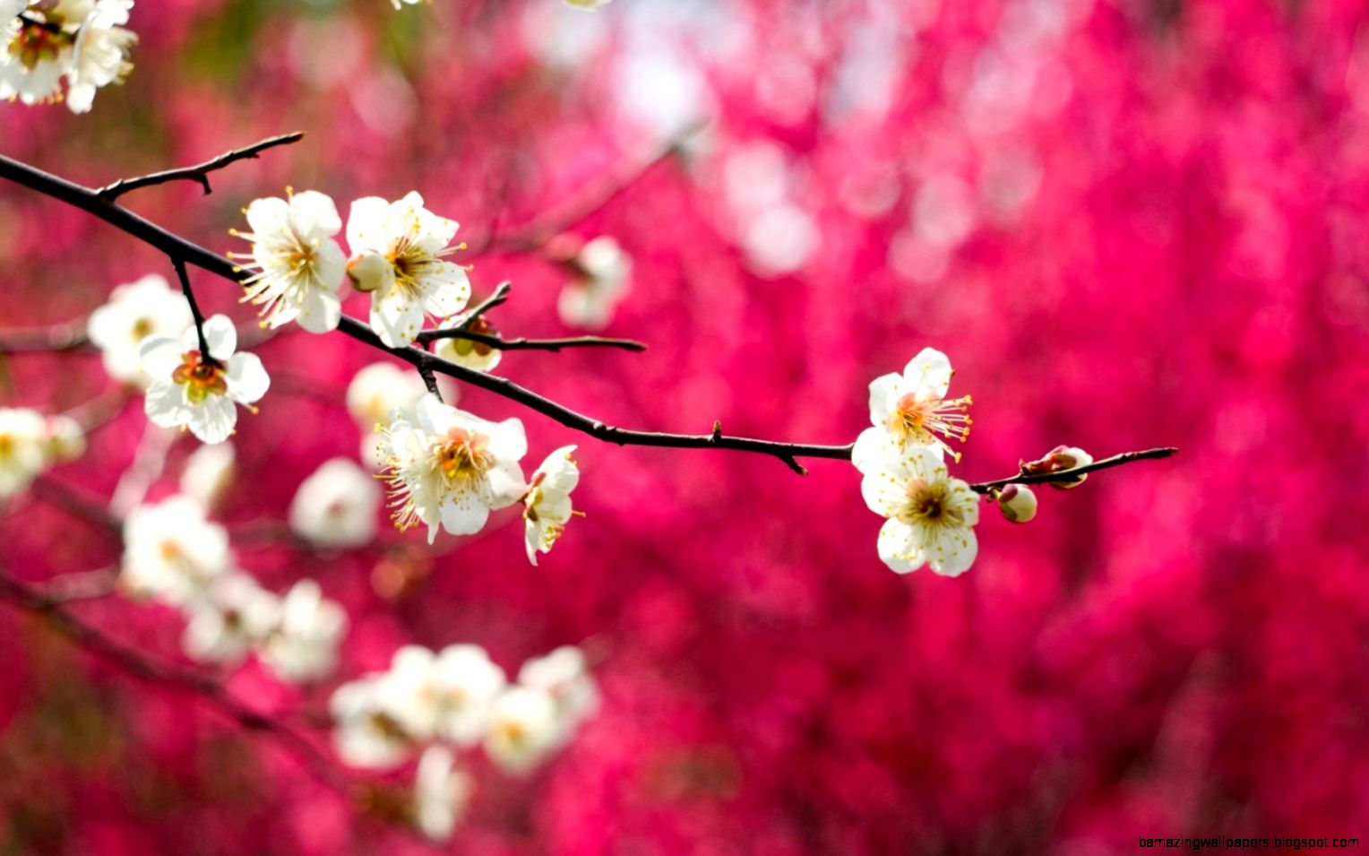 Spring Nature Wallpapers   WallpaperSafari