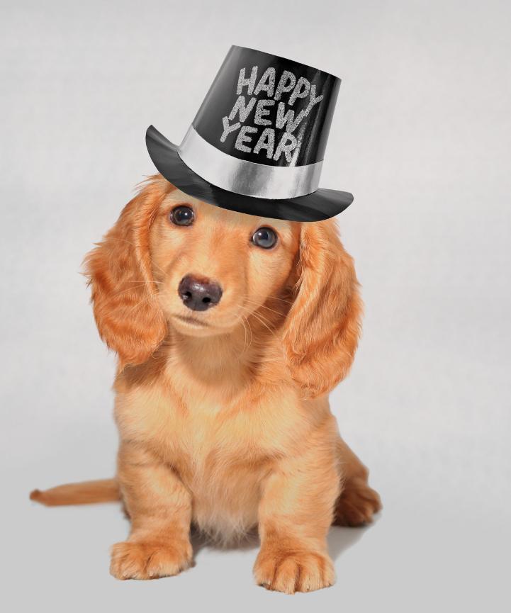 tracy rozzlynn s blog happy new year