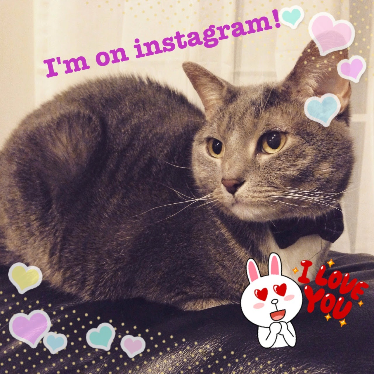 instagram cat