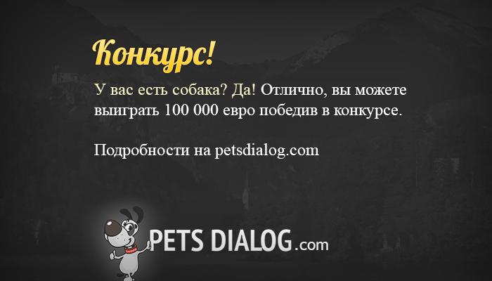 Конкурс для владельцев собак с призом 100 000 евро