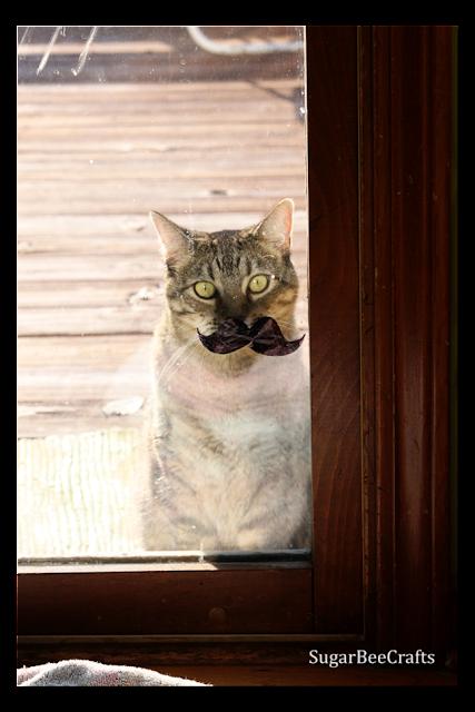 cat+in+a+mustache.png
