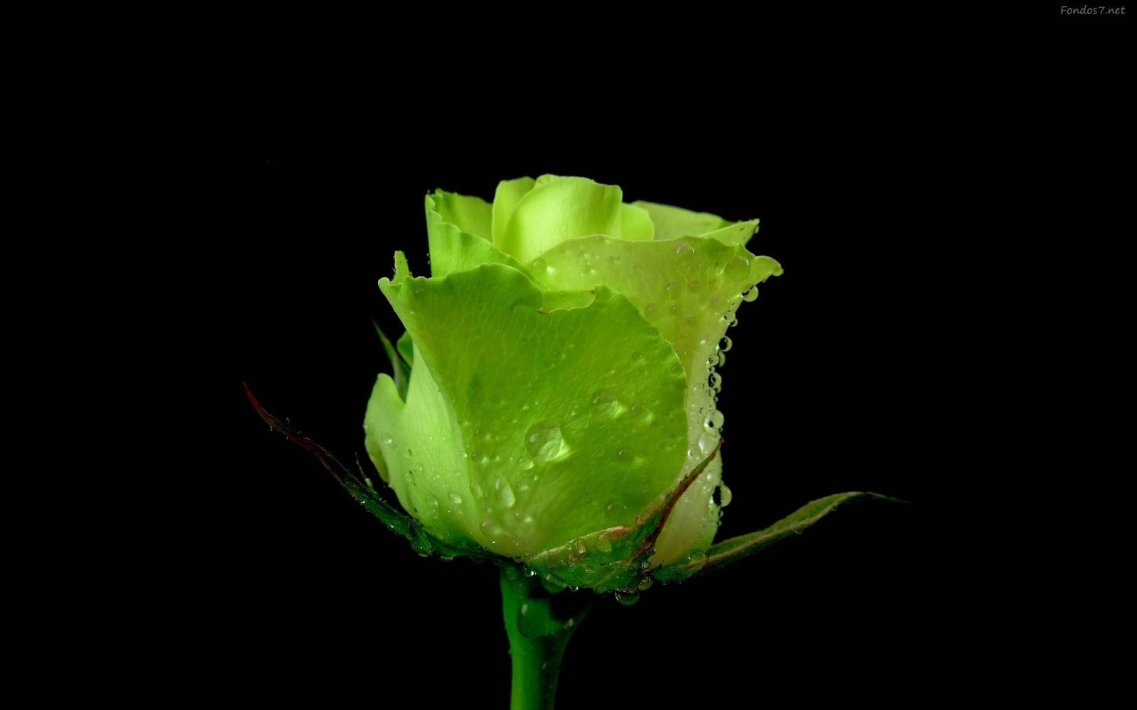 El Sentido Del Saber: El Significado De Las Rosas Por Su Color.