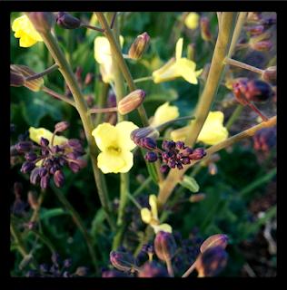 'growourown.blogspot.com' ~ an allotment blog