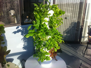 Growing organic is fun and very simple with this tower garden system.