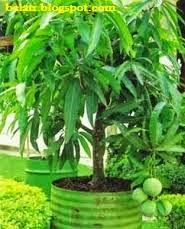 Ini Dia 4 Jenis Tumbuhan yang Cocok Ditanam di Halaman Rumah Anda