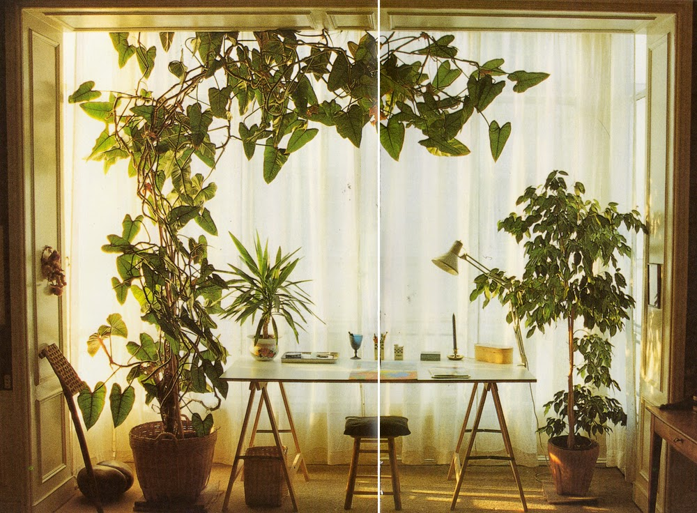 Moon to moon book terence conran decorating wth plants for Decoration of indoor plants