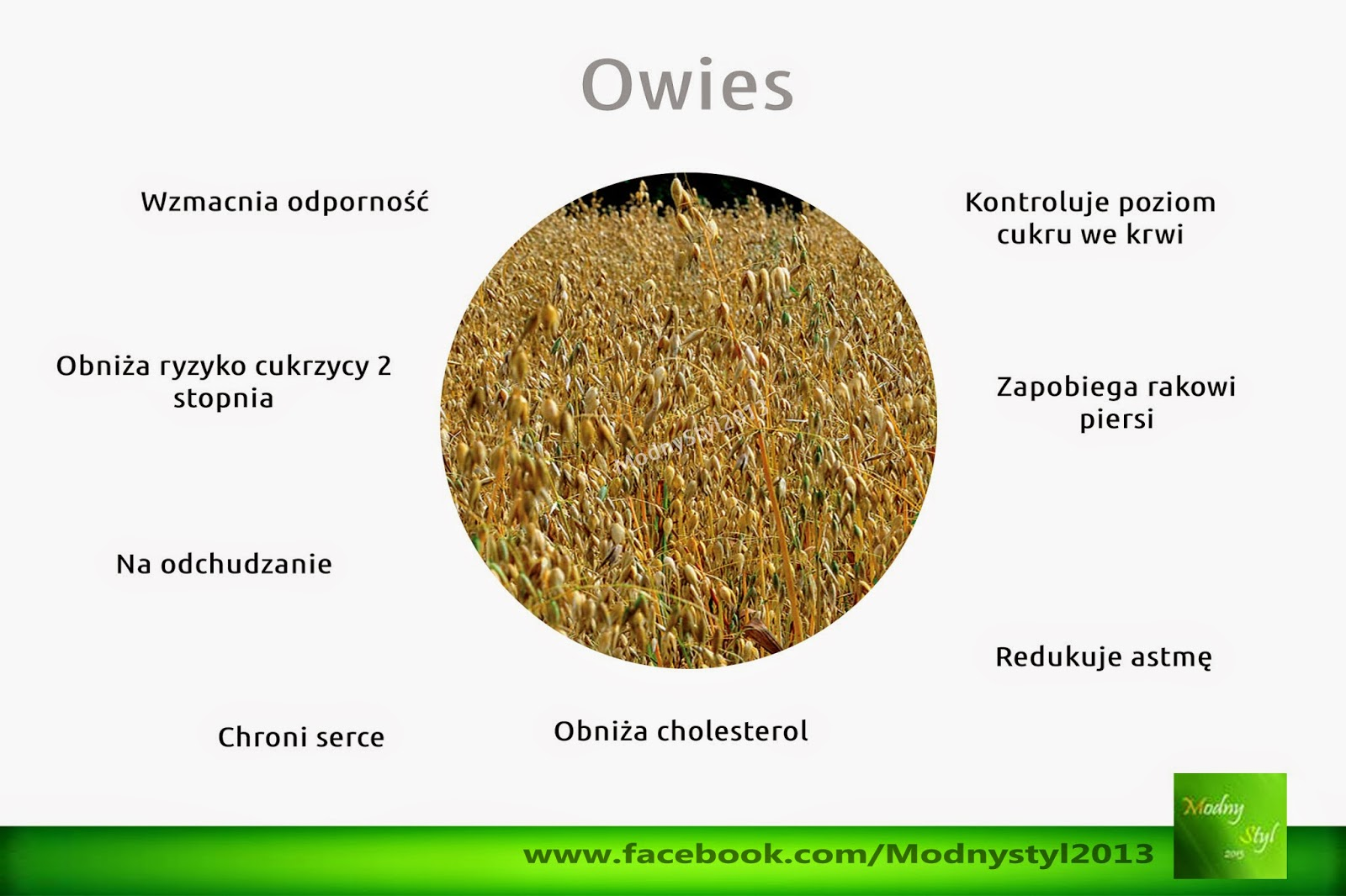 Owies i jego zdrowotne właściwości