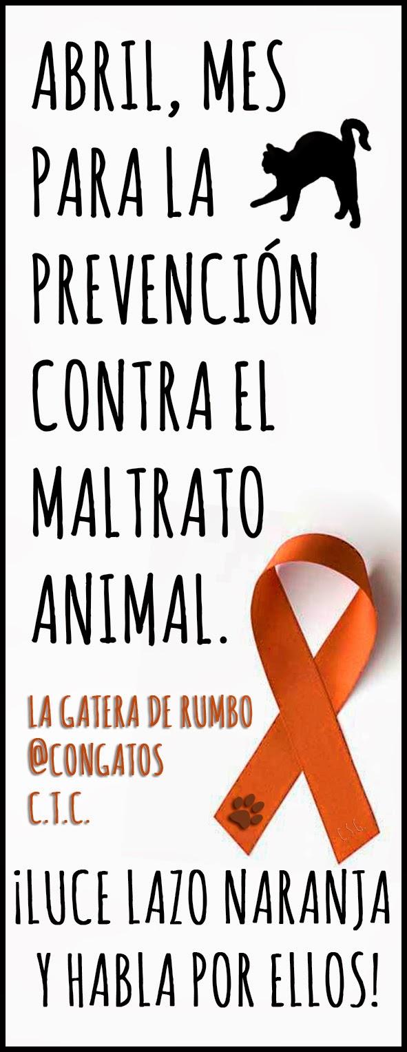 Lazo naranja contra el maltrato animal