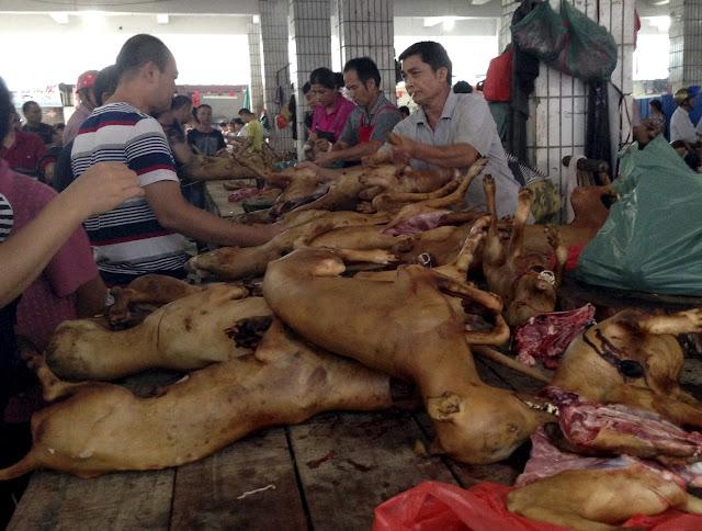 أكل الكلاب في الصين