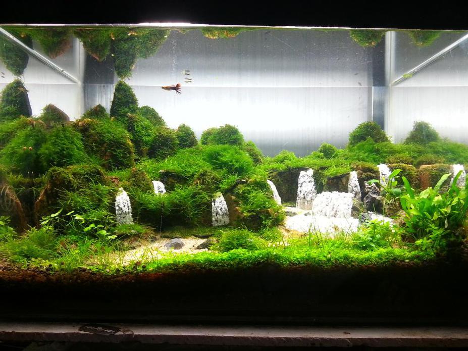 Macam tema aquascape aquascape batang - Gambar aquascape ...
