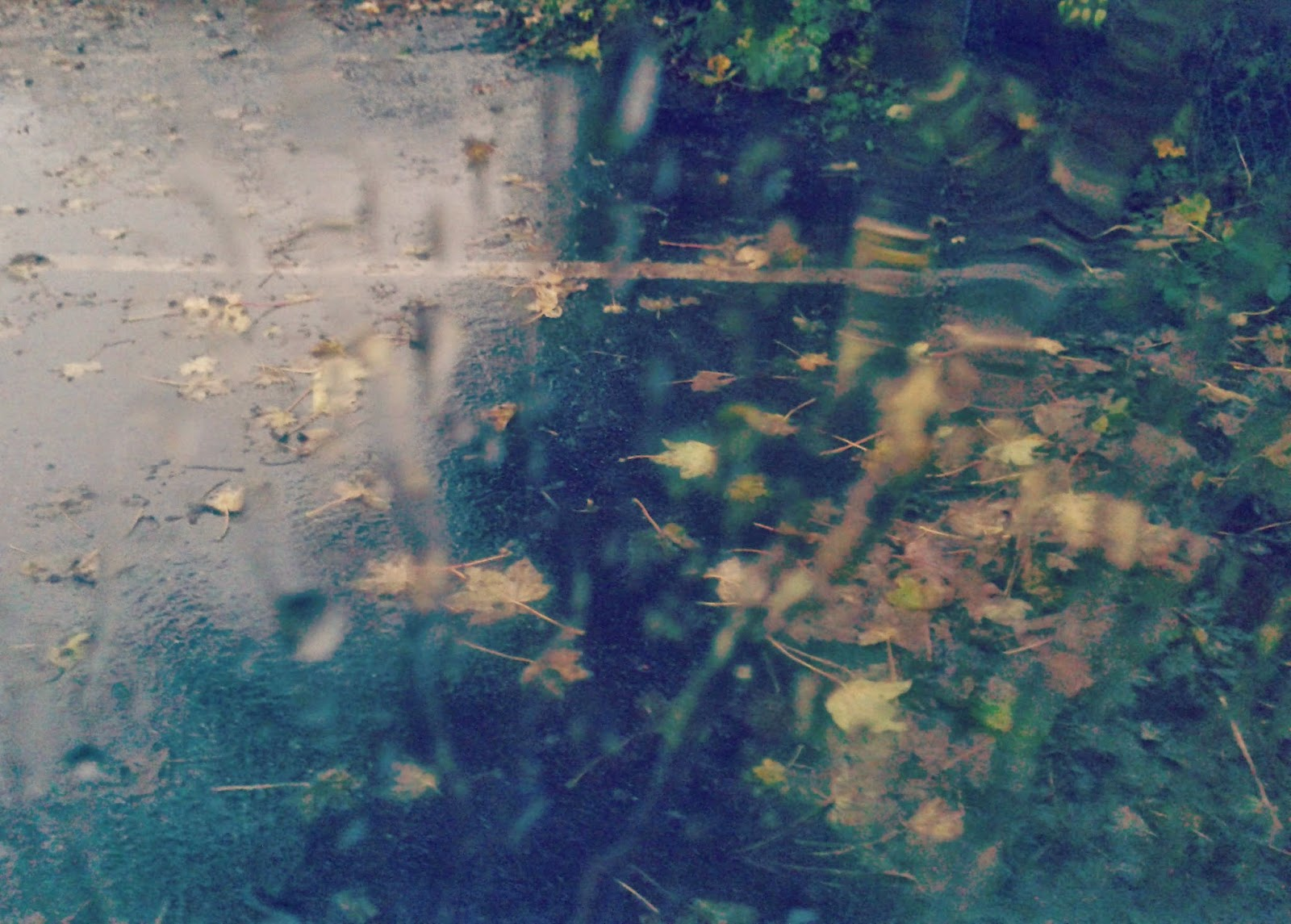 Project 365 #46 Day 316 - Autumn Rain // 76sunflowers