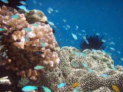 Sanur Bali Dive
